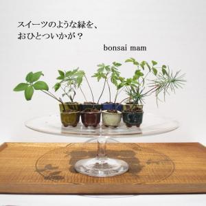 丸亀町グリーンマーケット(香川県高松市)2020/8/30出店します!
