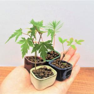 超ミニ盆栽の育て方
