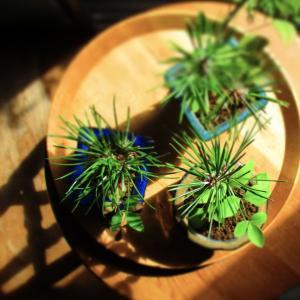 盆栽は室内で育つの?