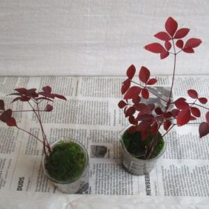 春休み、家族でお出かけ。ミニ盆栽どうしよう!?