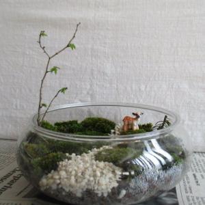 100均雑貨で苔盆景を作る