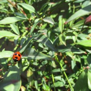 盆栽ママの庭だより~緑のカーテンから始まる生態系