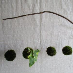 梅雨の時期、苔にカビが生えてしまったら?