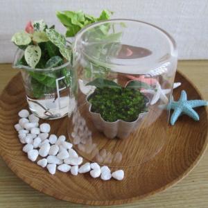 スイーツを作るように…キッチン小物でミニ盆栽