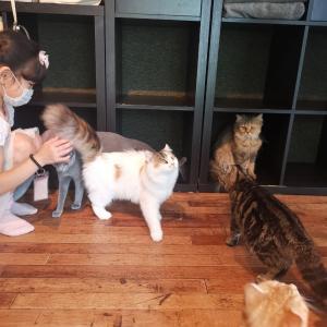 まさかの貸し切り!子どももOKの猫カフェ