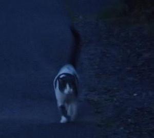 猫と日の出・・・(身近な風景)