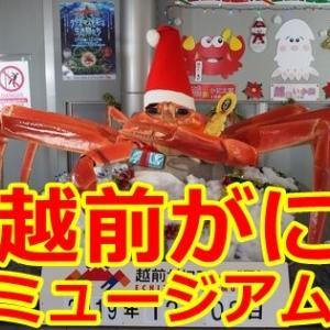 福井県の「越前がにミュージアム」は大人から子供までが遊んで学べる博物館(福井県越前町)