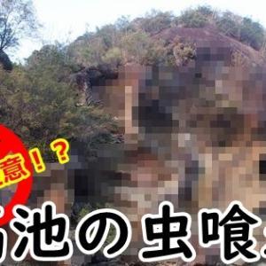 高池の虫喰岩 道の駅のお隣にあるインパクト抜群の奇岩(和歌山県古座川町)