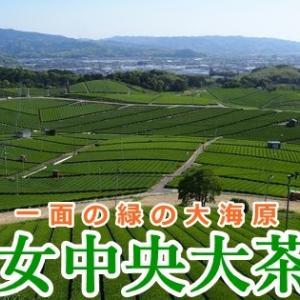 八女中央大茶園 展望台から眺める広大な茶畑は圧巻!(福岡県八女市)