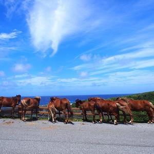 与那国島旅行記【3】南牧場は与那国馬と海が見られる絶景が魅力!