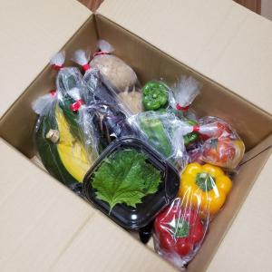 壱岐島の大地が育てた野菜