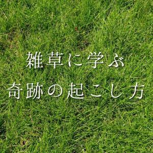 雑草に学ぶ、たった一つの奇跡の起こし方