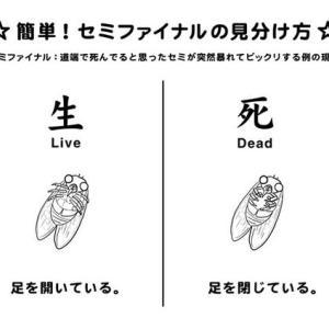 生か死か『セミファイナル』
