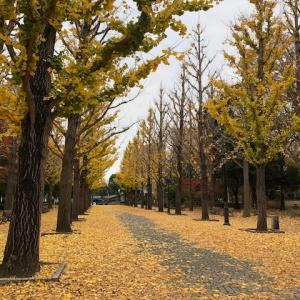 秋風の、ヴィオロンのため息の……