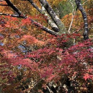 紅葉狩りに英彦山(ひこさん)へ行って来ました。