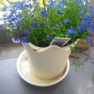 家庭菜園も、室内観葉植物も、「底面給水」で楽々に、元気に育てる