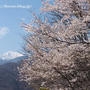 井戸尻史跡公園の桜