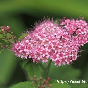 八ヶ岳山麓の蝶と花