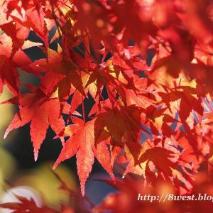 八ヶ岳山麓の黄・紅葉