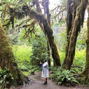 【アメリカキャンプ】オリンピック国立公園を観光&キャンプ!温帯雨林・ホーレインフォレストがすごい