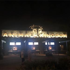 【アメリカ観光】フロリダディズニー!アニマルキングダムがめちゃめちゃおもしろかった