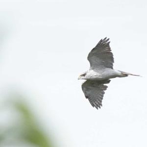 鳥撮】久しぶりにトリとり