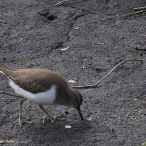 鳥撮】鳥さんのお食事っ