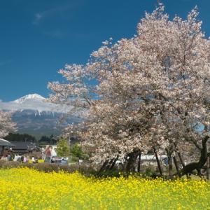 狩宿さくらまつりと富士山少々