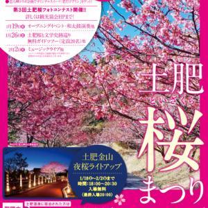 1月19日(日)から松原公園で土肥桜まつりが始まります