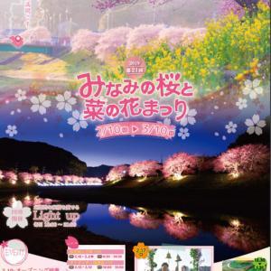 南伊豆町でも10日からみなみの桜と菜の花まつりが始まっているよ