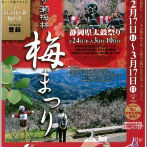 伊豆月ケ瀬梅林 梅まつりも17日から開催されますよ