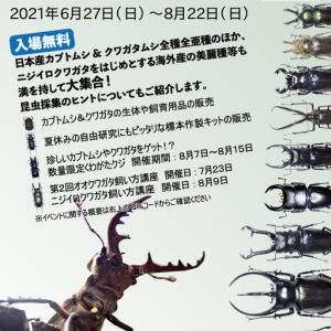 27日(日)から富士山樹空の森でカブトムシ&クワガタムシ‐採集と標本展‐始まっています