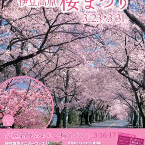 23日から伊豆高原桜まつりが始まります