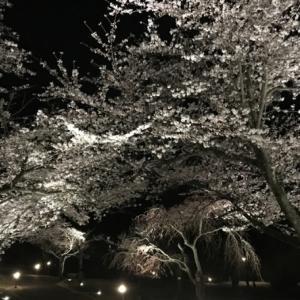 29日(木)からの伊豆高原大室山さくらの里のさくらの里夜桜観賞会は中止です