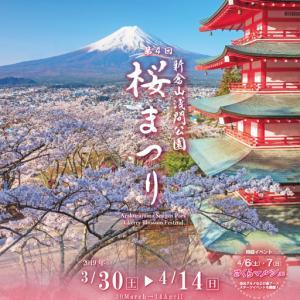 4月4日(土)~の富士吉田の新倉山浅間公園 桜まつりは新型コロナウイルス感染症拡大のため中止です