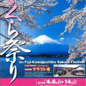 6日から富士・河口湖さくら祭りが始まります