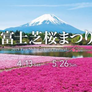 今日、13日(土)から富士本栖湖リゾートで富士芝桜まつりが始まります