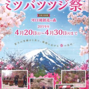 20日より河口湖創造の森で富士桜ミツバツツジまつが始まります