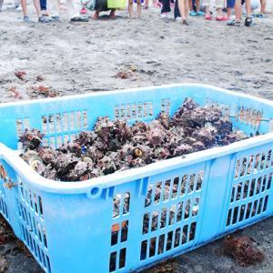 15日(木)に西伊豆の宇久須クリスタルビーチで海の安全祈願祭