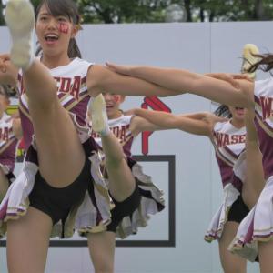 Cheerleading チア ⚾️ 早稲田大学応援部チアリーダーズ BIG BEARS 2019 嵐『サクラ咲ケ』🏉