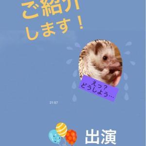 LINEスタンプ発売のご案内!!我が家のハリネズミ〜ミント&ライチ