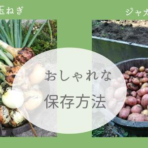 玉ねぎとジャガイモのおしゃれな保存方法!ゴキブリ対策にハーブとネット