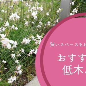 ガーデニング|狭いスペースをおしゃれに彩るおすすめの低木と花