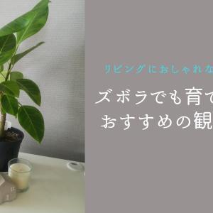 リビングにおしゃれなグリーンを!ズボラでも育てやすいおすすめの観葉植物