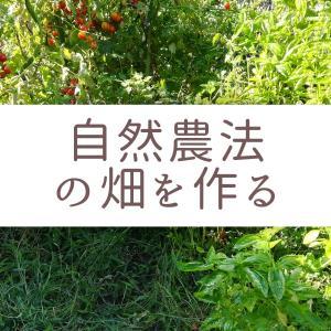 家庭菜園初心者向け|自然農法の畑で無農薬野菜を作る