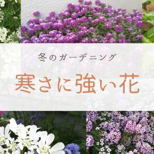 冬のガーデニング|寒さに強いおすすめの花5選