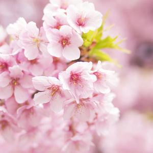 【春分の日♩】昼と夜の長さが等しくなる日。