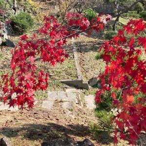 写真 「枝垂れ紅葉」