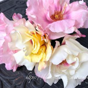 【庭】バラ鉢増し記録(フレグランスペルシカ、レイニーブルー )