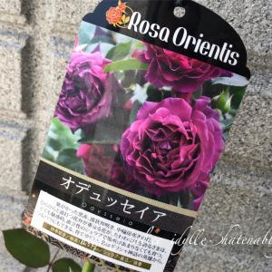【庭】オデュッセイアさん、いらっしゃいました☆